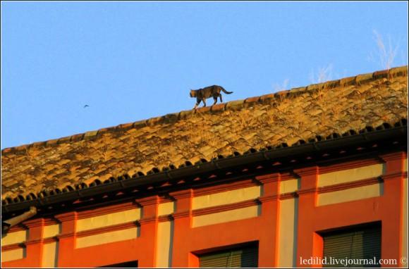 Кіт на даху одного з будинків, що обмежують Plaza de la Corredera