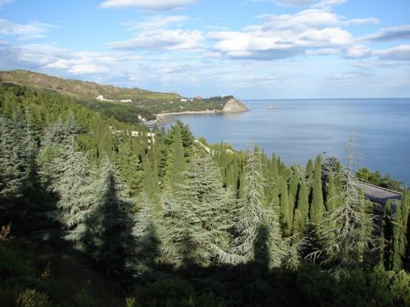 Лес на крымском побережье
