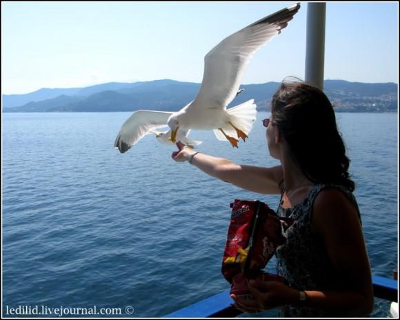 Переїзд на поромі й годування чайок, які летять за кораблем, — окремий атракціон із неабиякою насолодою