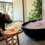 """""""Джамала"""" в Австралії: готель 5*, де можна переночувати поруч із левами й ведмедями"""
