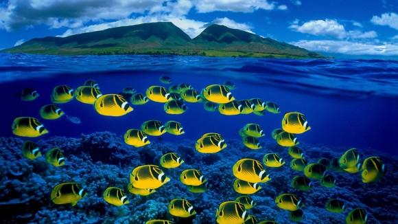 Hawaii_sea